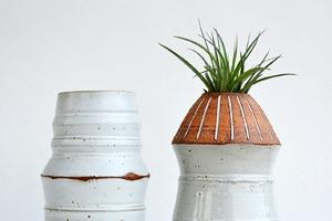 Где покупать комнатные растения икашпо