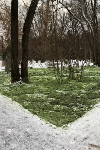 Зеленый снег впарке «Зеленая роща»