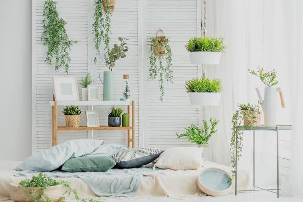 Где покупать домашние растения икак ихвыбирать?