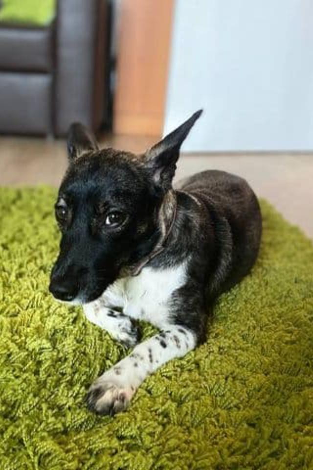 Собаку, потерявшуюся вДомодедове, нашли!