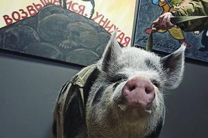 Вгалерею «Свиное рыло» вПетербурге пришли следователи. Художников обвиняют воскорблении ветеранов