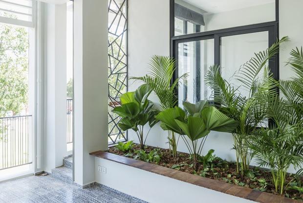 Чистый кислород: Каквыбрать растения подстиль интерьера