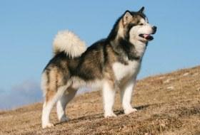 Как взять породистую собаку бесплатно