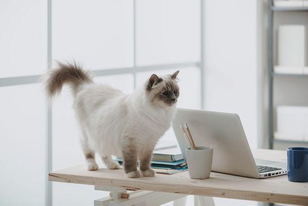 Можно ли держать кота в офисе
