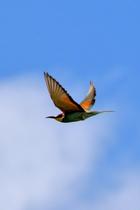 Вприложении «Гусьгусь» запустился бесплатный подкаст про птиц
