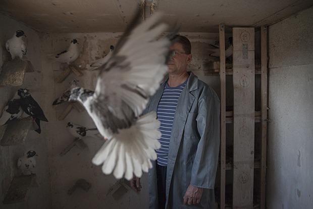 Последние романтики: Ктодержит голубятни в Екатеринбурге