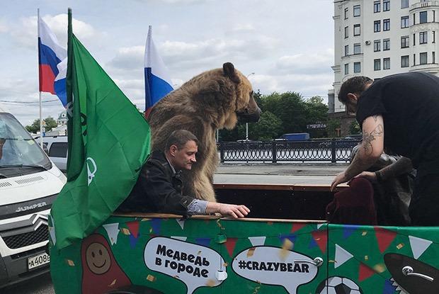Можноли возить медведя вкабриолете поМоскве