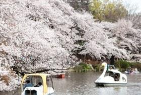Митака, город соседа Тоторо