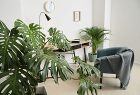 Как пересаживать комнатные растения весной игде искать новые