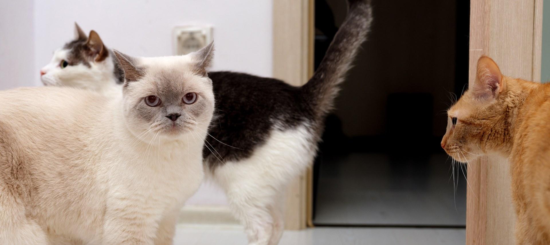 «Счастлива благодаря котам»: Яработаю котоняней