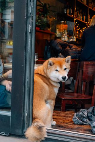 Треть ресторанов вРоссии считают себя dog-friendly