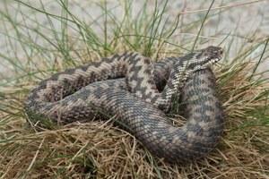 Чем опасны московские змеи ипауки?