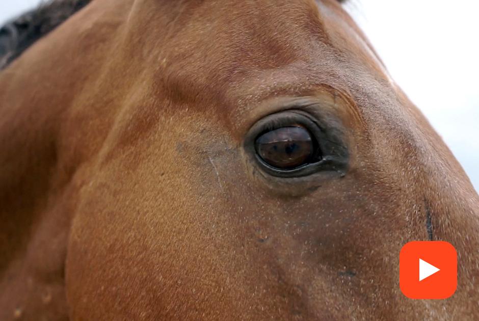 Что нетак спрокатом лошадей вгородских парках?