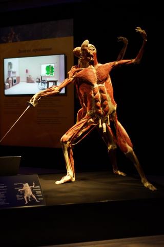 СКпроверит выставку человеческих тел наВДНХ. Нанее пожаловались заоскорбление чувств верующих