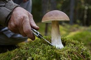 Как правильно собирать грибы: Инструкция дляновичков илюбителей