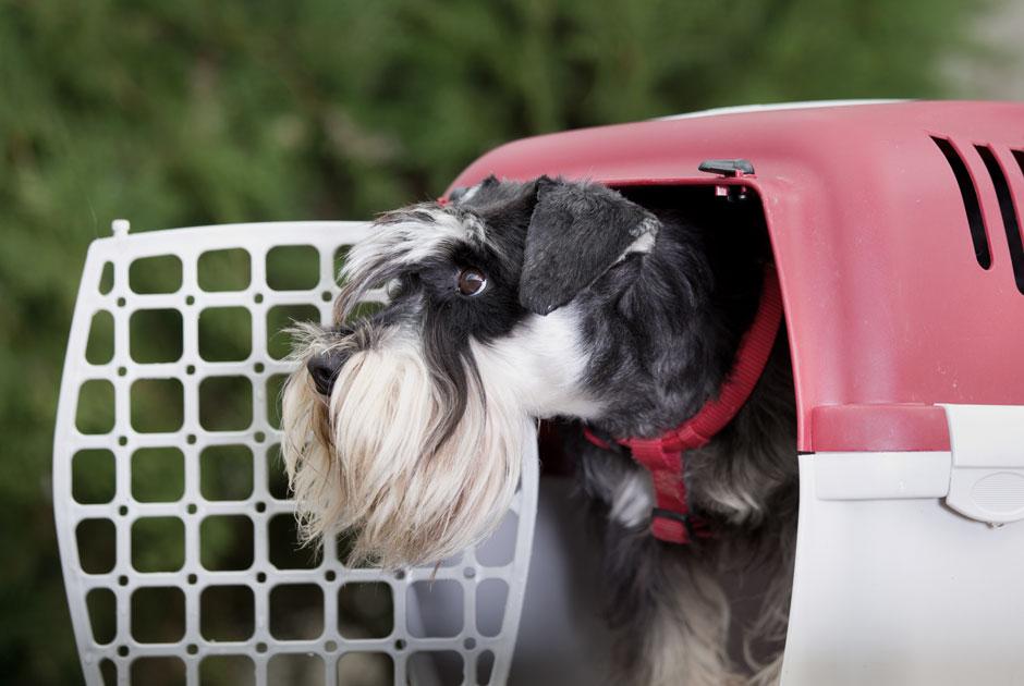Сотрудники Домодедова потеряли собаку пассажирки