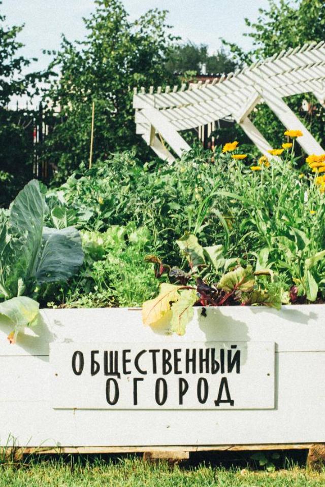 Впарке Горького появится общественный огород. Все лето там можно выращивать овощи, зелень ицветы