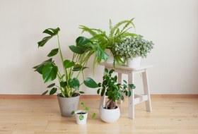 Instagram назвал самые популярные комнатные растения. Рассказываем, где ихпокупать икак заними ухаживать