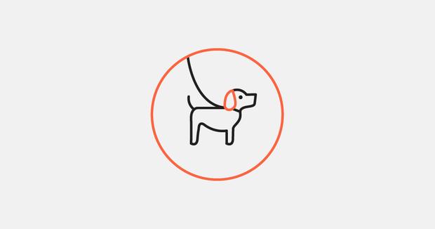Проект помощи бездомным животным Teddy Food, на котором можно следить за котами из Екатеринбурга