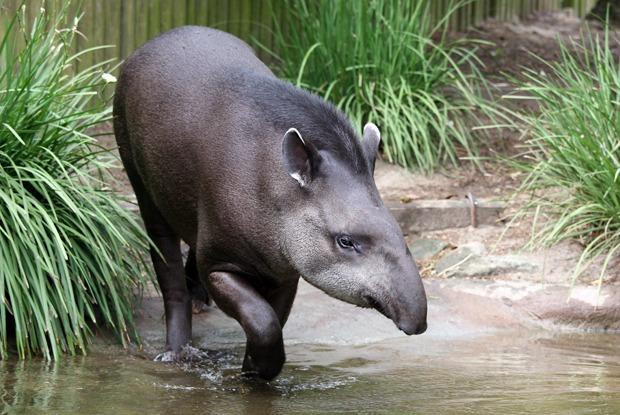 Как петербургские зоозащитники добиваются закрытия всех мини-зоопарков вгороде