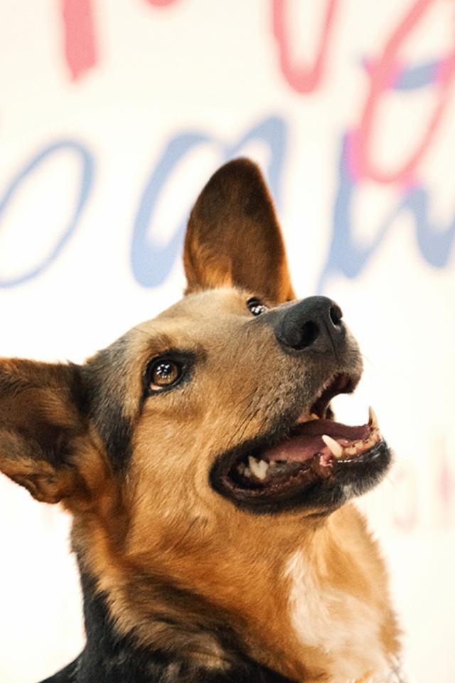 На«Хлебозаводе» 23мая пройдет выставка бездомных животных «Надо брать!» Питомцев можно забрать домой бесплатно