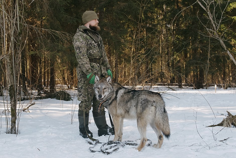 Алексей Седой ушел из спецназа и завел лосей. Теперь у него война с браконьерами
