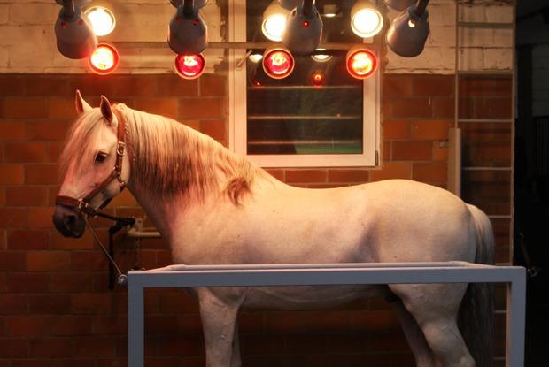 Зачем лошадям солярий?