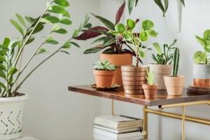 Как подготовить комнатные растения кзиме