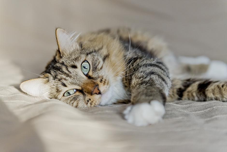 На кота, маникюр ипсихотерапию: Какие необычные выплаты можно получить вроссийских компаниях