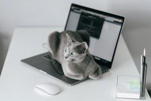 «Янесмог работать дома»