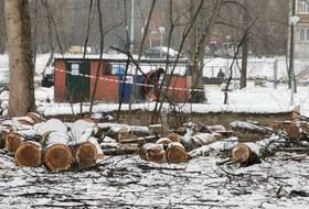 Как устроены незаконные стройки Москвы: Напримере Левобережного, гдеБерезовую аллею вырубили поднебоскребы