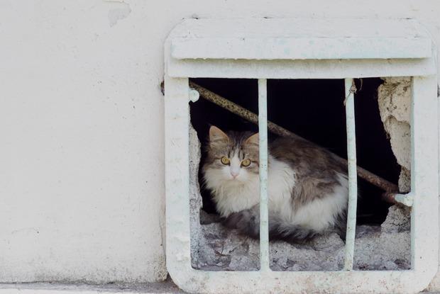 Клонирование телеграм-каналов, санкционная передышка иМинстрой засвободу кошек