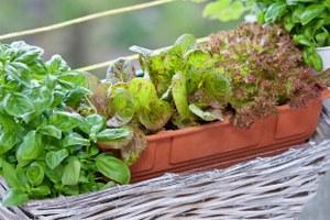 5простых советов для тех, кто хочет заняться огородничеством набалконе