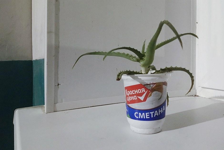 «Уродливые комнатные растения»: Ваши ботанические неудачи уже обшутили во «ВКонтакте»