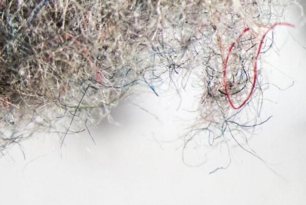 Как выглядит ваша домашняя пыль подмикроскопом