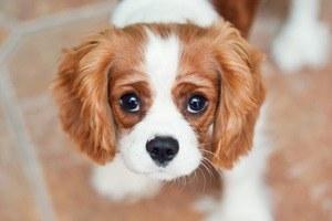 8 пород собак для города