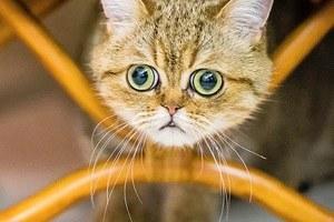 «Ресторанный день», бои учёных, ночь «Друзей», выставка котов иещё 17событий