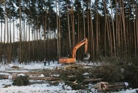 Шоссе вникуда: Еще один лесвМоскве уничтожат дублерами