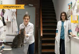 Коты иты: Как помочь брошенным животным