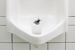 Взять на муху: Александра Шевелева о чистоте вобщественном туалете и силе простых решений