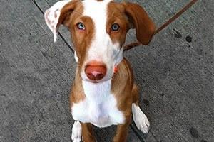 Монетизируй пса: 5 способов заработать на домашних животных