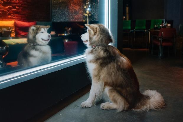 Собаки в барах