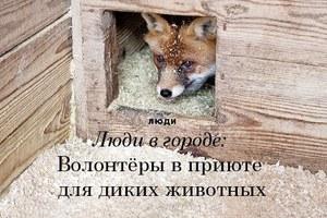 Люди в городе: Волонтёры вприюте длядиких животных