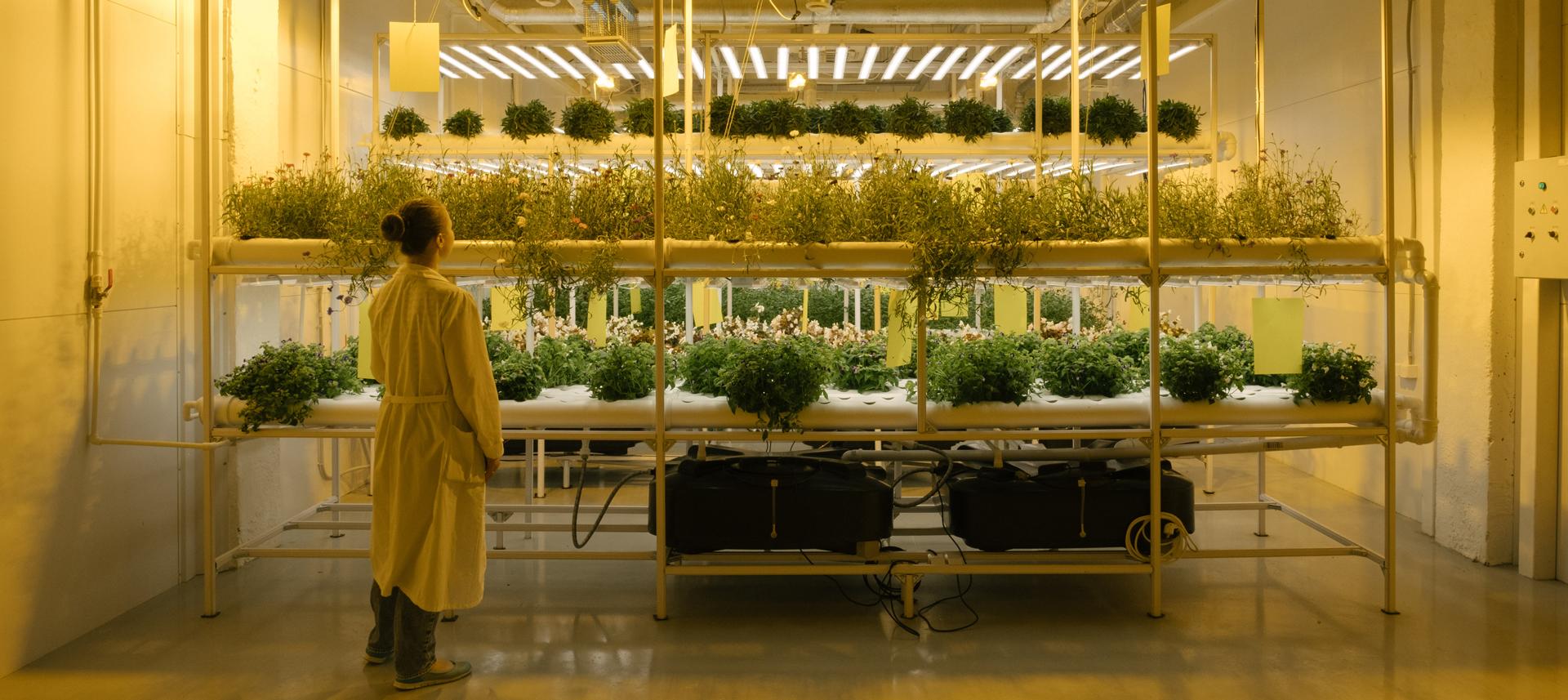 Как в Новой Москве выращивают съедобные цветы, микрозелень имини-арбузы